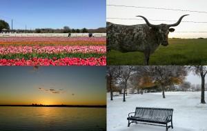 【达拉斯图片】德克萨斯 - 关于达拉斯的春夏秋冬
