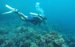 【万鸦老图片】美娜多,一个给遗忘的潜水胜地。