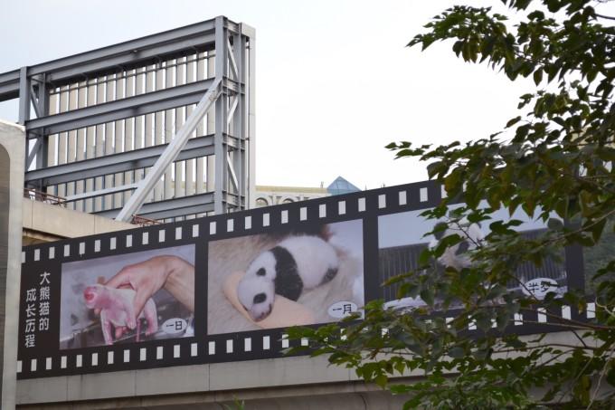 长河流出紫竹院公园,流入北京动物园之前,其间有三座石桥.