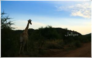 【好望角自然保护区图片】【醉美南非 彩虹之国】 ——This is South Africa.