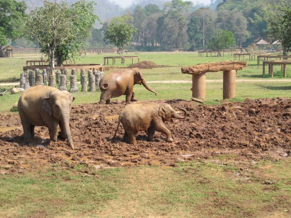 拒绝虐待 清迈大象自然公园 Elephant Nat