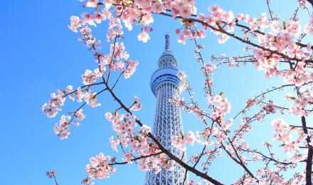 价格说明东京晴空塔与墨田海游馆套票