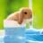 在路上的兔子