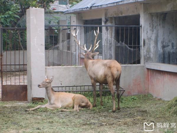 济南动物园原名金牛公园