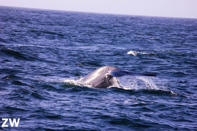 壁纸 动物 海洋动物 桌面 680_453