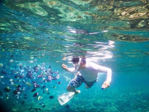 壁纸 海底 海底世界 海洋馆 水族馆 510_383