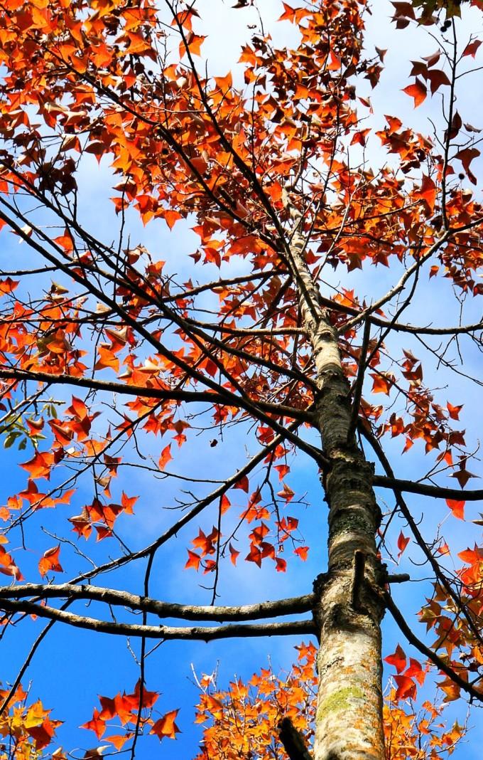 海南热带飞禽世界,南丽湖,琼海的塔洋镇大顺农场樱花,龙寿洋万亩田野