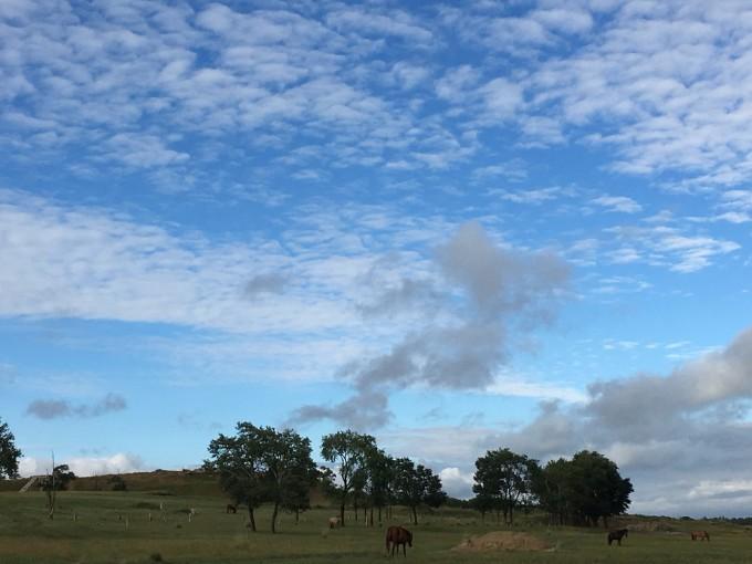在初秋的时节,邂逅诗和远方的田野